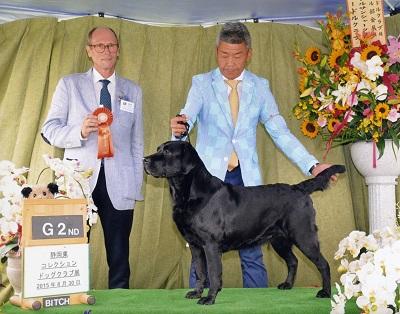 2015.8.30静岡東コレクションドッグクラブ展(小)レディ.jpg
