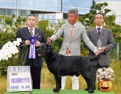 2015.9.26大阪北高槻愛犬クラブ展ケニー.jpg