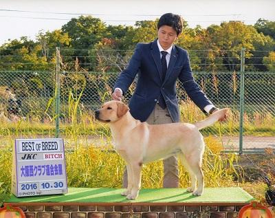 2016.10.30大阪西クラブ連合会展リンダBOB.jpg