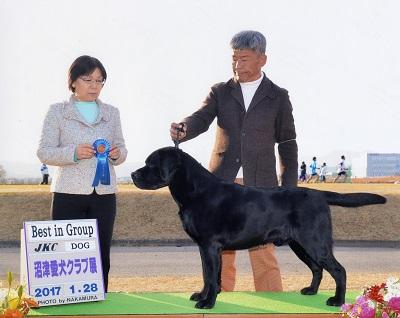 2017.1.28沼津愛犬クラブ展ラスキーG1.jpg