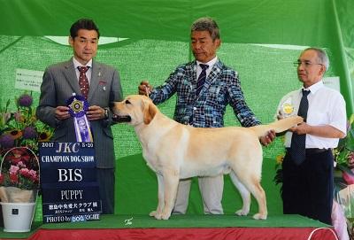 2017.5.20徳島中央愛犬クラブ展バロンP・BIS.jpg