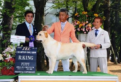 2017.5.4高松エレガンス愛犬クラブ展バロンP・R・KING .jpg