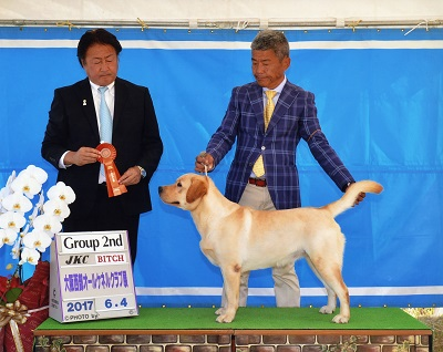 2017.6.4大阪西部オールケネルクラブ展リンダG2.jpg