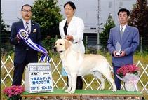 10月23日(日) アロー:BIS ティナー:BOB  大阪北レディス愛犬クラブ展