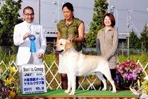 2011年10月9日  大阪西部オールケネルクラブ展 アロー G1 ティナーG2
