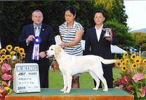 2011年8月28日 御殿場中央愛犬クラブ展 アローG3 ティナーG3 リッチP R・KING