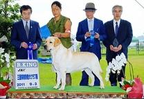 2011年9月3日  三重県南勢愛犬クラブ展 アロー R・KING ティナーG3 リッチP R・KING