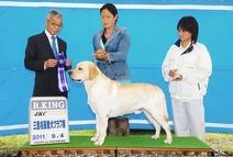 2011年9月4日  三重県名張愛犬クラブ展 アロー R・KING ティナーG3 リッチP KING
