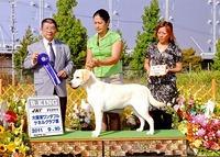 2011年9月11日  大阪東ワンダフルケネルクラブ展 アロー BIG ティナーG2 リッチP R・KING ジーナ EXE G