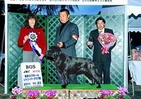 2011年11月23日 ティナー BOS  エイミ AOM : 岐阜ラブラドールレトリーバークラブ展