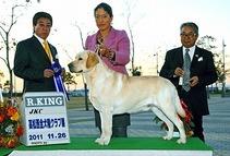 2011年11月26日 アローR KING  ティナーBOB : 高松西全犬種クラブ展