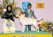 2011年11月20日 FCI九州インターナショナルドッグショー