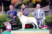 2011年12月4日 アロー  R・king   ティナー BOB : 兵庫県連合会展