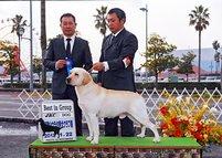 2012年1月22日 ハマー&エイミ G1、リッチ&レディー WINNERS : 和歌山ウラタ愛犬クラブ展