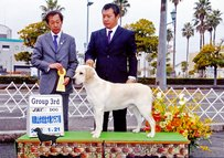 2012年1月21日 リッチ G3 & BOB : 和歌山伏虎全犬種クラブ展