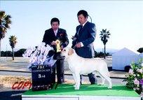 2012年2月12日 ハマーG3、レディー WINNERS : 火の国熊本お犬クラブ展