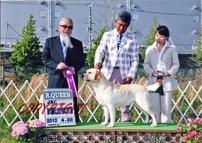 2012年4月28日 エイミ  R・Queen    ハマー BOB  : 東大阪市ミクリヤ愛犬クラブ展