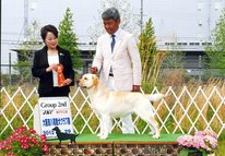 2012年4月29日 エイミ  G2 & BOB     ハマー  BOB  : 大阪東八尾愛犬クラブ展