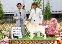 2012年5月4日 ハマー BOB & G3   ティナー BOB & G1 : 大阪北メイプルファミリードッグクラブ展