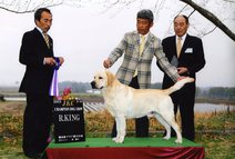 2013年3月10日 アロー RKING ジーナG1 熊本県クラブ連合会展