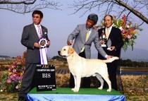 2013年3月9日 アロー BIS ジーナ G2 熊本武蔵愛犬クラブ展