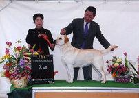 2012年3月24日 リッチ BOB & G3   ジーナ BOB & G2 : 神戸フィールオールドッグクラブ展