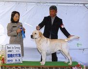 2013年3月2日 アロー G1 ジーナ G2 沼津愛犬クラブ展 3日 アロー&ジーナ G2 志太愛犬クラブ展