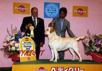2013年2月10日 アロー BOB ジーナ G3 : 神奈川インターナショナルドッグショー