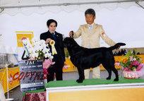 2013年4月20日 リッチ BOB レディ G3 高松西全犬種クラブ展