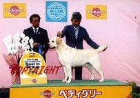2013年4月21日 リッチ G1 レディ AOM ジーナ BOB FCI四国インターナショナルドッグショー