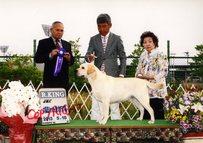 2013年5月18日 リッチ RKING レディ G2 大阪東ハッピー愛犬クラブ展 19日 アロー G2 ジーナ G3 大阪西愛犬クラブ展