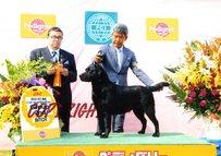2013年5月26日 リッチ BOB レディ G2 FCI東北インターナショナルドッグショー