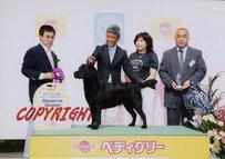 2013年7月14日 アロー G4 レディ R.QUEEN FCI北海道インターナショナルドッグショー