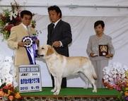 2013年9月15日 アロー BIS レディ G1 金沢全犬種クラブ展