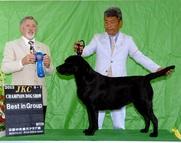 2013年9月7日 リッチ G2 レディ G1 京都中央愛犬クラブ展