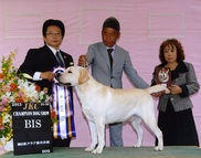 2013年10月19日 リッチ BIS レディ G1 岡山県クラブ連合会展