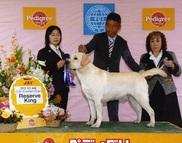 2013年10月20日 リッチ R.KING レディ G3 FCI中国インターナショナルドッグショー