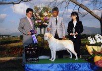 2013年10月26日 リッチ R.KING 火の国熊本お犬クラブ展