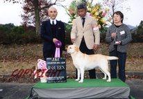 2013年11月24日 アロー G2 エイミ R.QUEEN 長崎県クラブ連合会展
