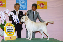 2013年12月15日 リッチ BOB エイミ BIS FCI東京インターナショナルドッグショー