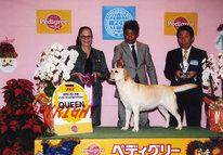 2013年12月8日 リッチ G3 イージス G1 レディ AOM エイミ QUEEN FCI大阪インターナショナルドッグショー