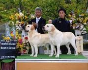 2014年4月26日 リッチ G1 ジーナ G1 倉敷全犬種クラブ展