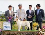 2014年5月31日 リッチ G2 エイミ R.QUEEN 大阪南ベストフェイス全犬種クラブ展