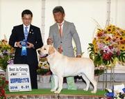 2014年6月21日 リッチ G1 レディ G2 滋賀県甲賀愛犬クラブ展