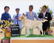 2014年7月19日 アロー R.KING レディ G2 坂出中央愛犬クラブ展