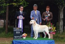 2014年9月20日 リッチ BIS 岡山県玉野愛犬クラブ展