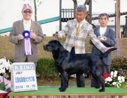 2014年11月15日 ケニー R.KING レディ G1 三重松坂愛犬クラブ展