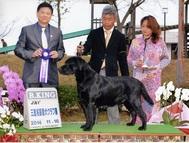 2014年11月16日 ケニー R.KING レディ G1 三重名張愛犬クラブ展