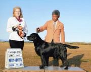 2014年11月29日 ケニー G2 ピコ BOB 神奈川北オール愛犬クラブ展