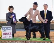 2015年1月24日 ケニー R.KING 志太愛犬クラブ展